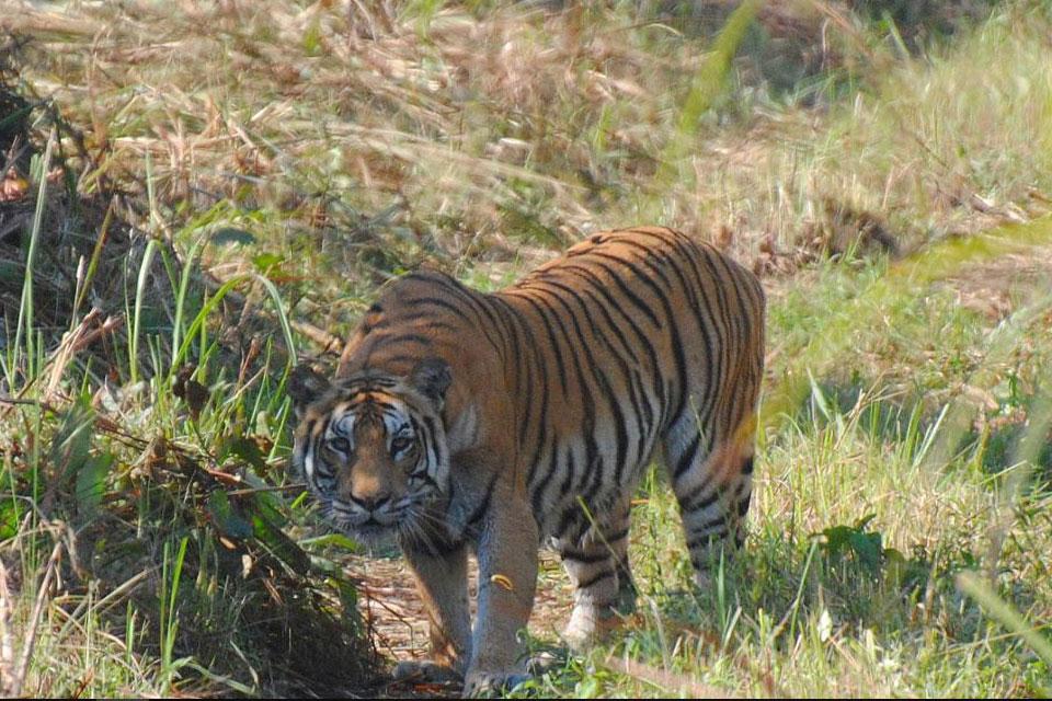 Bardia National Park Safari