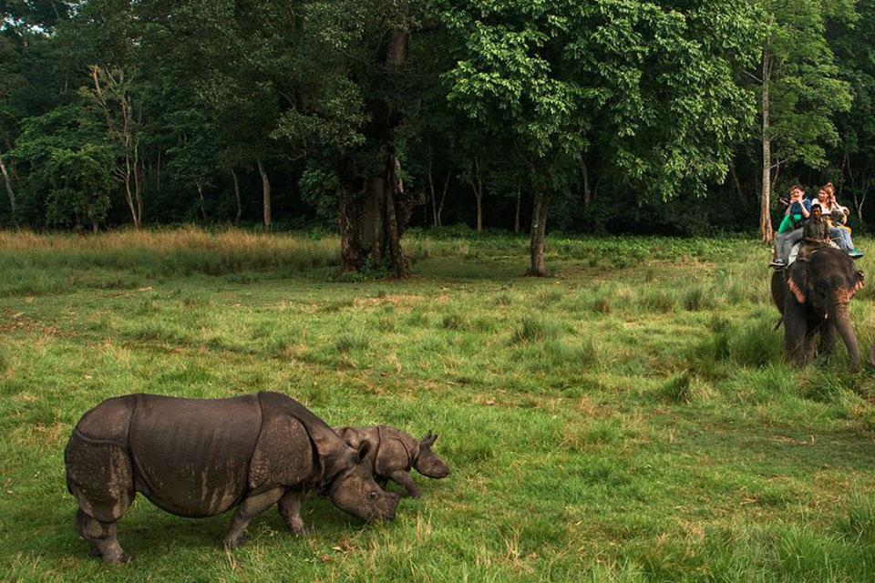 Chitwan National Park Safari