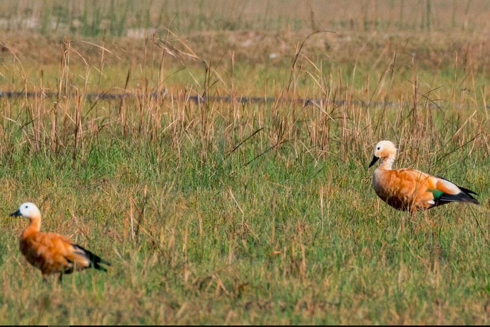 Koshi Tappu Wildlife Reserve Safari